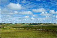 A long line of white sheep dotted across a vast high plateau grassland.