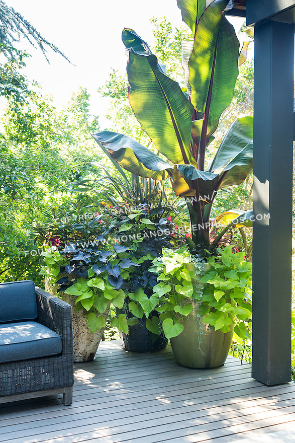 Lush tropical containers on the back deck.