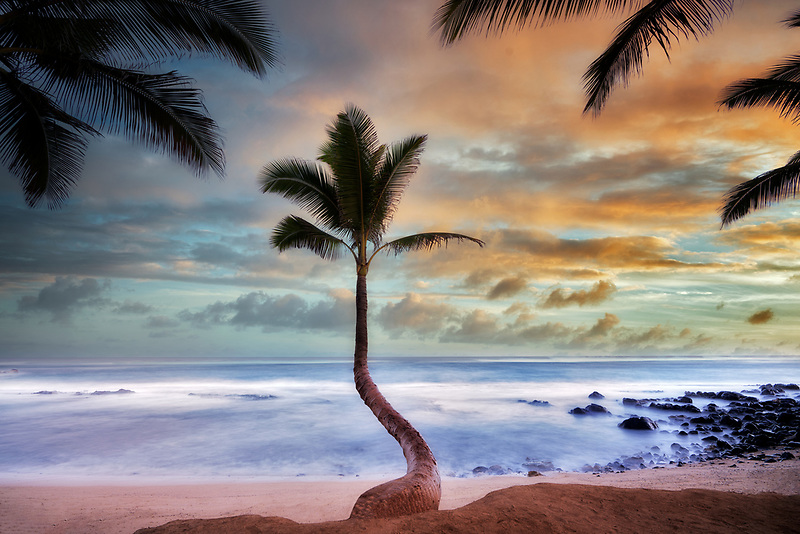 Palm trees and surise clouds. Paia, Maui Hawaii