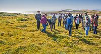 Grass Identification workshop field work in California Coastal Prairie with Michelle Cooper, by California Native Grassland Association