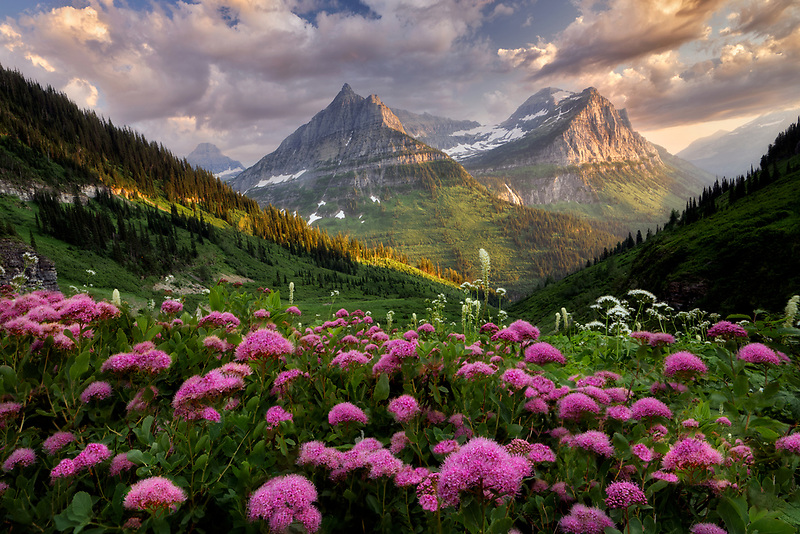 Rosey Spirea and bear grass, in Glacier National Park Mountains - Mt. Reynolds and Mt. Oberlin, Montana
