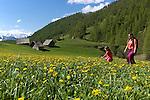 Paturages en  fleurs près du village de Souliers entre Arvieux et Chateau Queyras. au fond la pointe de Rasis (2844 m)<br /> Flowered high mountain pasture nearby Souliers village between Arvieux valley and Chateau Queyras valley
