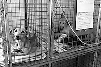 Two sick dogs are kept at IFAW's CLAW program clinic near Soweto in South Africa. There is always a lack of enough cages for all the animals that need treatment.  CLAW provides veterinary services to cats and dogs in some of the poorest shantytowns outside of Johannesburg. Through its mobile clinics, outreach programs and veterinary hospital, CLAW provides life-saving support to the community's animals every day.  2/21/12 Julia Cumes/IFAW