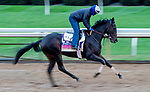 October 30, 2020: Madone, trained by trainer Simon Callaghan, exercises in preparation for the Breeders' Cup Juvenile Fillies Turf at Keeneland Racetrack in Lexington, Kentucky on October 30, 2020. Scott Serio/Eclipse Sportswire/Breeders Cup/CSM