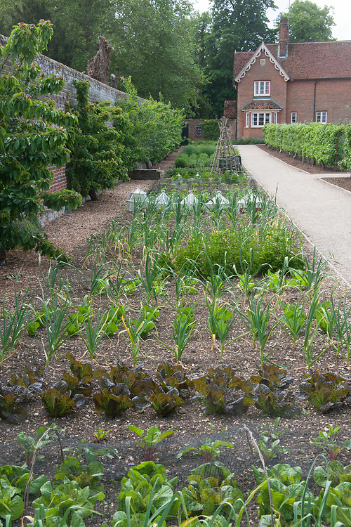 Vegetable bed, walled garden, Audley End, late May.