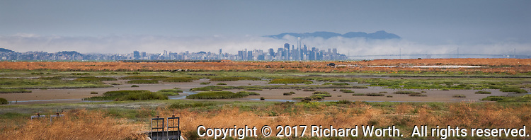 A panoramic view of Hayward's salt marsh with the San Francisco City skyline on the horizon.  The fog is rolling through the Golden Gate and into the bay but remains behind the cityscape and Bay Bridge.