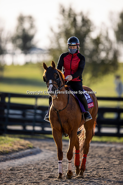November 3, 2020: Whitmore, trained by trainer Ron Moquett, exercises in preparation for the Breeders' Cup Sprint at Keeneland Racetrack in Lexington, Kentucky on November 3, 2020. Alex Evers/Eclipse Sportswire/Breeders Cup