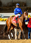 DECEMBER 01, 2018 : Enliven in the Demoiselle Stakes at Aqueduct Racetrack on December 24, 2018 in Ozone Park, NY.  Sue Kawczynski/ESW/CSM