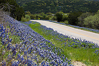 Roadside Bluebonnets in the Texas Hill Country, Texas Hill Country, Texas, USA.