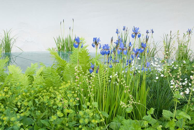 Fresh spring garden with blue irises, euphorbia, heuchera, with white background