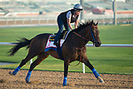 DUBAI,UNITED ARAB EMIRATES-MARCH 29: Mubtaahij,trained by Bob Baffert,exercises in preparation for the Dubai World Cup at Meydan Racecourse on March 29,2018 in Dubai,United Arab Emirates (Photo by Kaz Ishida/Eclipse Sportswire/Getty Images)