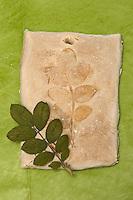 Kinder basteln Blattkacheln aus Salzteig, Salzteig mit Abdruck vom Rosenblatt nach dem Brennen