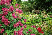 Blooming Rambling Rose Garden, New Jersey