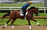 June 01, 2015 Keen Ice (ridden by Faustino Aguilar) galloped on a rainy, overcast day at Churchill Downs during a special workout period for Belmont Stakes horses.  He flies to New York on June 2.  ©Mary M. Meek/ESW/CSM