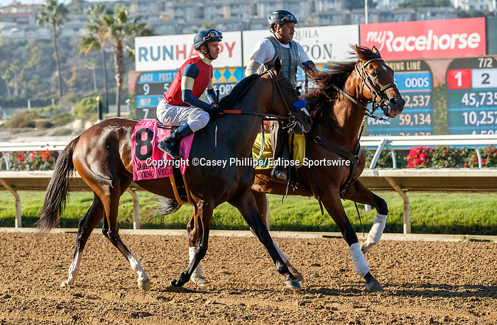 DEL MAR, CA  SEPTEMBER 4: #8 Going to Vegas, ridden by Flavien Prat, in the post parade of the John C. Mabee Stakes (Grade ll) on September 4, 2021, with Del Mar Thoroughbred Club in Del Mar, CA.  (Photo by Casey Phillips/Eclipse Sportswire/CSM)