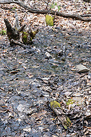Cranberry Hill, West Virginia. Vernal Pool, Nearly Dry.