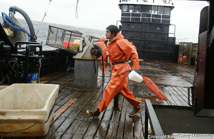 """10/20/03 crab NWS::   Crewman Erik Snyder empties bait jars and bags of herring back into the sea as the F/V Exito picks up its crab pots.  Having never been crab fishing before, Snyder received such names as """"Greenhorn"""", """"Baitboy"""", and """"Swabee"""" (from the movie """"Captain Ron""""),  and was paid a half crewshare. He did most of the jobs on the boat nobody else wanted to do including cleaning the wheelhouse windows and doing the dishes, in addition to being in charge of the bait.  When asked how he felt after his first day on the job he replied, """"This sucks.  I haven't done a damn thing right on this boat since I started."""""""
