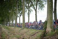 peloton through the trees<br /> <br /> 2014 Tour de France<br /> stage16: Carcassonne - Bagnères-de-Luchon (237km)