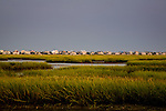 Tidal marsh on the Intracoastal Waterway, Murrels Inlet, SC, USA