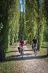 Germany, Baden-Wuerttemberg, Tauber Valley, Bad Mergentheim: cyclists riding along poplar alley at Castle Garden | Deutschland, Baden-Wuerttemberg, Taubertal, Bad Mergentheim: Pappelalle im Schlossgarten, Radfahrer