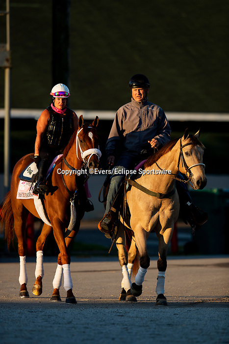April 27, 2021: Kentucky Oaks contender Pass the Champagne at Churchill Downs in Louisville, Kentucky on April 27, 2021. EversEclipse Sportswire/CSM