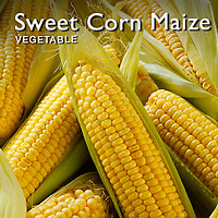 Sweet  Corn Maize | Maize Pictures Photos Images & Fotos