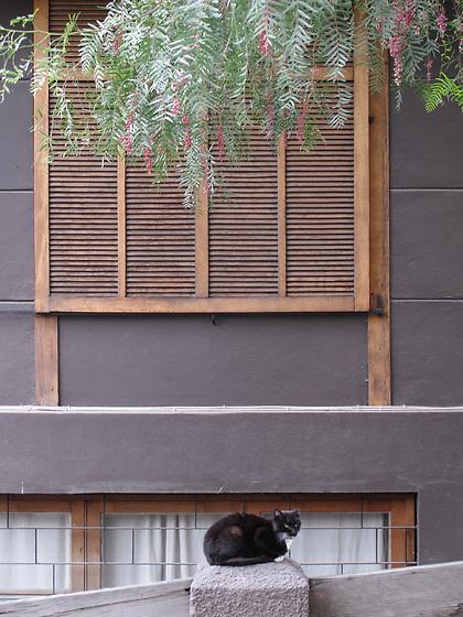 Gato y ventana / Santiago de Chile, Chile.<br /> <br /> Edición de 10 | Víctor Santamaría.