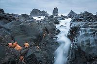 Moody coastline with rock formations and starfish near Rapahoe near Greymouth, West Coast, New Zealand