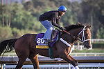 October 27, 2014: Unbridled Forever exercises in preparation for the Breeders' Cup Distaff at Santa Anita Park in Arcadia, California on October 27, 2014. Zoe Metz/ESW/CSM