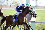 Eventual winner, Wasted Tears with Rajiv Maragh (blue cap) at the start of The Jenny Wiley (grII) at Keeneland Race Course. 04.10.2010