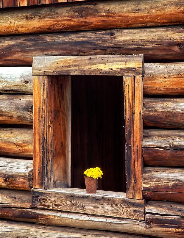 V00233M.tif   Window of abandoned log cabin and dandelions. Freemont National Forest, Oregon
