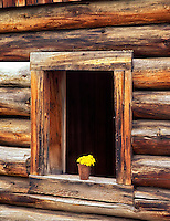 V00233M.tif   Window of abandoned log cabin and dandelions. Freemont National Forest, Oregon