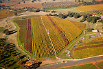 Colorful vineyards with autumn colors in California's Shenandoah Valley..Cooper Ranch and vineyards