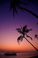 Dusk falls over Coconut Palm Trees and an offshore island from Wakatobi Dive Resort, Southeast Sulawesi, Indonesia.