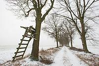 Allee im Winter, Uckermark, Brandenburg, Deutschland