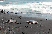 Turtles Bask in the Sun