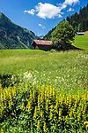 Austria, Vorarlberg, Kleinwalsertal, Mittelberg: flower meadow | Oesterreich, Vorarlberg, Kleinwalsertal, Mittelberg: Blumenwiese