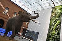 Europe/France/Midi-Pyrénées/31/Haute-Garonne/Toulouse: Muséum de Toulouse- Musée d' Histoire Naturelle- l'Entrée