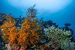 Orange Reef