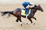 LOUISVILLE, KY - MAY 04: Shagaf, trained by Chad Brown and owned by Shadwell Stable, exercises and prepares during morning workouts for the Kentucky Derby and Kentucky Oaks at Churchill Downs on May 4, 2016 in Louisville, Kentucky. (Photo by Scott Serio/Eclipse Sportswire/Getty Images)