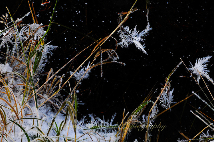 """""""ICE BLOOMS AT MIDNIGHT""""<br /> <br /> Ice crystals form what look like blooms on yellow grass with a star studded background. For me it was like looking into another universe.<br /> <br /> Photographing ice is endlessly intriguing to me. Fortunately, here in Montana, the subject matter is pretty much endless for several months a year."""