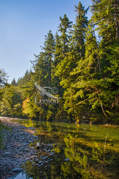 Sol Duc River on Merrill Ring property.  Olympic Peninsula, Washington.  Sept.