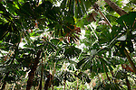 Rainforests of Tropical North Queensland