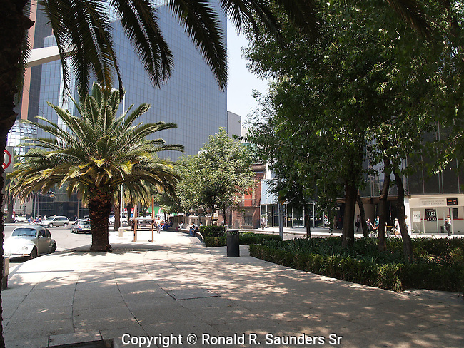 PALM TREES AND PARK IN MEXICO CITY