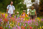 A wild flower walk on Rabbit Ears pass in the Summer time with the Kagan family.