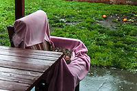 A neighborhood cat finds refuge from a spring rainstorm.