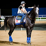 DUBAI, UAE - MARCH 24: Arrogate on the track at Meydan Race Track in preparation for the Dubai World Cup Race on March 24, 2017 in Dubai, UAE. (Photo by Douglas DeFelice/Eclipse Sportswire/Getty Images)