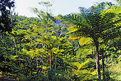 Forêt de la Thi