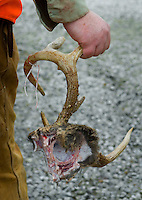A hunter carries a skull cut with antlers after delivering his deer to the butcher.<br />