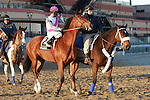 Favorite Vyjack with Cornelio Velasquez holds off 41 - 1 longshot Siete de Oros to win143rd running of the Grade II Jerome Stakes for 3-year olds, going 1 mile 70 yards on the inner dirt, at Aqueduct Racetrack.  Trainer Rudy Rodriguez.  Owner Pick Six Racing **